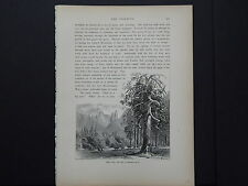 One In-Text Engraving, c 1872 S4#150 Valley Floor, Cathedral Spires, California