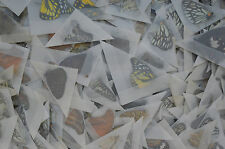 lot of 100 Mixed Unmounted Butterflies # NEW COMING 2016 # Vietnam NORTH