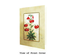 Study Of Martagon Lilies. Box of TEN BLANK CARDS - Greeting Card