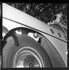 DF178 Press Photo 2x2 Negative 1961 Funny Cat Ambulance Wheel Buick Special Car