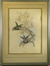 J. Gould & H.C. Richter Handcolored Lithograph Glaucis Fraseri,Could   c.1854