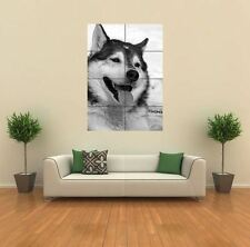 SIBERIAN HUSKY NEW GIANT POSTER WALL ART PRINT PICTURE G572