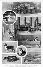 DOGS, COLLIES, THE CRAGSTON KENNELS, WEEKLY BATH, DOG SHOW, CHAMPION, COLLIE DOG