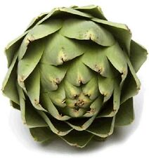 75 GREEN GLOBE ARTICHOKE Cynara Scolymus Vegetable Seed