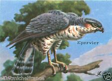 CARD BON POINT Epervier d'Europe Accipiter Nisus Eurasian sparrowhawk 60s