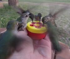 HAND HELD HUMMINGBIRD FEEDER- FREE SHIPPING 5 PORTS FOR MORE FUN