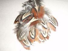 Queue Faisan épaule plumes (2nds) x75 masques / robe de fantaisie