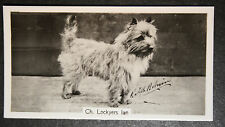 Cairn Terrier  Champion  1930's Vintage Photo Card  VGC