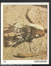 Top Sellers Card - Animals of The World - Card No 75 - Porcupine (51)