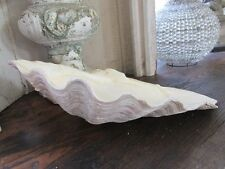 "WONDERFUL Medium CLAM SHELL Perfect for Home Decor 13"" Wide Fill & Display"