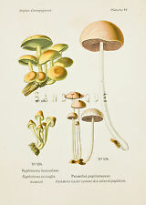 "Dufour's Atlas of Mushrooms - ""HYPHOLOMA FASCICULARE"" - Chromolithograph - 1891"