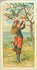 Vintage Victorian Trade Card -- Young Girl Picking Apples