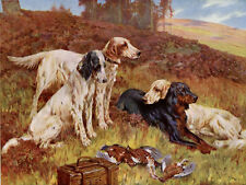 ENGLISH GORDON SETTER WORKING GUN DOG ANTIQUE ART PRINT Arthur Wardle Old Hands