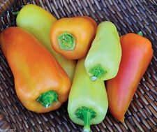 30 Feher Ozon Paprika Pepper ,From Hungary. Heirloom Pepper, Organic Seeds