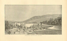 A Ford On The Wye, by H.W.B. Davis, Cattle In Water, 1890 Antique Art Print.