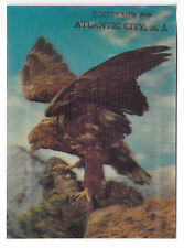 3D Lenticular Hawk Raptor Bird of Prey Souvenir Atlantic City NJ Postcard 4X6