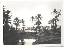 """PHOTO c.1930~""""PALMERAIE & VILLAGE""""~OASIS de GABES~TUNISIE-"""