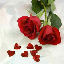 FD705 10 Seeds Chinese Red Rose Seed For Lover Red Rose Romantic 10PC/ A