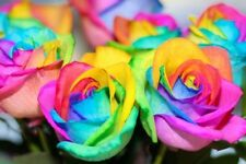 Pack 3 Type Roses (Rainbow - Black & Green Color Rose Total Seed 21-Each 7 Seed)