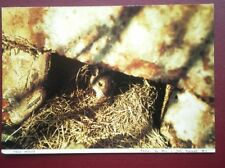 POSTCARD ANIMALS FIELD MOUSE