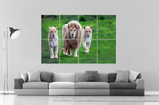 LION SAUVAGE Wall Art Poster Grand format A0 Large Print