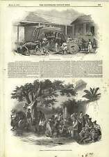 1845 Slave Labour Brazil Sugar Mill Slaves Punishment