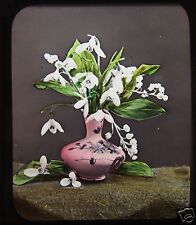 STUNNING Glass Magic Lantern Slide SNOWDROPS & LILLY OF THE VALLEY C1890 FLOWERS