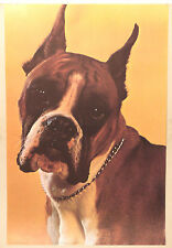 (PRL) CANE BOXER DOG PORTRAIT CHIEN VINTAGE AFFICHE POSTER PRINT ART COLLECTION