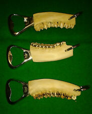 ROE BUCK DEER STAG JAW TEETH BOTTLE OPENER Keyring Keychain Taxidermy