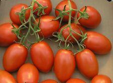 Roma Tomato Seeds 400 SEEDS FREE SHIPPING!!!! 2016 Season