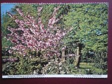 POSTCARD NORTHUMBERLAND HEPSCOTT - SPRING BLOSSOM IN ROBIN WOOD