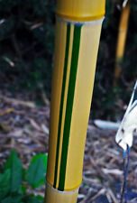 Golden Striped Timber Bamboo, 1 Gallon Live Plant. Phy. vivax 'Aureocaulis'
