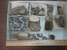 Wholesale Flat BLOWOUT! - Fossil Fern and Mixed Minerals and Fossils Look 037