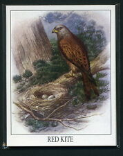 BRITISH BIRDS OF PREY Collectors Cards - Red Kite Tawny Owl & Hen Harrier images