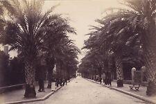 Hyères Côte d'Azur France Photo attr. àBoissonnas Vintage Albumine vers 1880