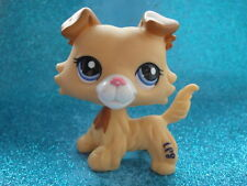 ORIGINAL Littlest Pet Shop Collie DOG # 2452  I Shipping with Polish