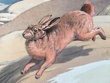 Neave Parker 1910-1961 Original Watercolour Artwork Illustration Red Rock Hare