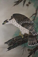 A04C5B ~鷹 Strong Hawk & Old Pine Tree~ Japanese hanging Scroll