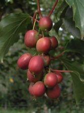 """Sono super Gnam: uva spina dal Giappone, """"MINI-Kiwi""""!"""
