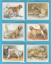 DOGS - IMPERIAL PUBLISHING LTD. - SET OF L6 DOGS CARDS -  GOLDEN  RETRIEVERS