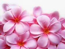 "12 Pink Hawaiian Plumeria Frangipani 3"" Artificial Silk Flower Head Wedding Bulk"