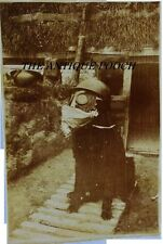Rare WW1 Photograph ~ French Trench War Dog With Gas Mask And Helmet