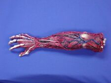 HALLOWEEN BLOODY SKINNED RIGHT ARM  PROP BODY PART