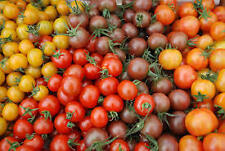 Huge mix of cherry tomato seeds, red, yellow, orange, purple, pear-shaped!