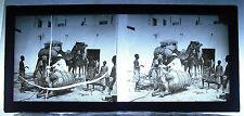 Photographie colonies Afrique c1900 colon sur un dromadaire couché dromadary