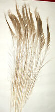 """50 Peacock Sword Feathers 20-25"""" L Bleached & Dyed in 21 colors USA Seller"""
