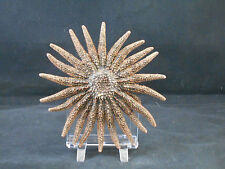 "Beautiful Real Multileg ""Sunflower"" Starfish 4 - 6"" size  Sea Star Craft Beach"