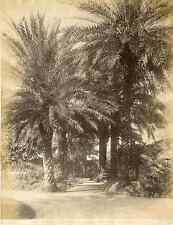 France, Cannes, Palmiers de l'Hôtel Gray d'Albion  Vintage albumen pri