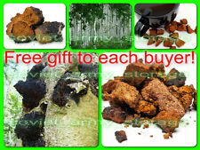 Organic Siberian Chaga! Birch mushroom. Super useful! Ecologicaly clean! 1pound.