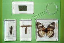 Leopard Lacewing Butterfly Life Cycle with labels in 4 Blocks - Learning Box Set